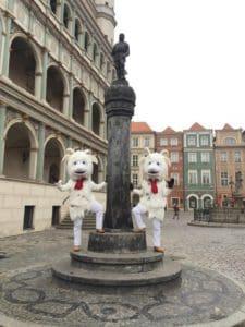 Koziolki Pregierz Poznan